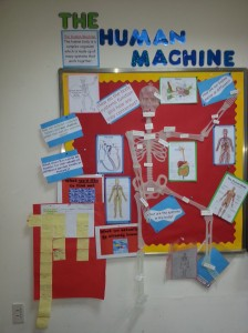 Learning about how body systems are interconnected